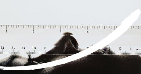 rino logo